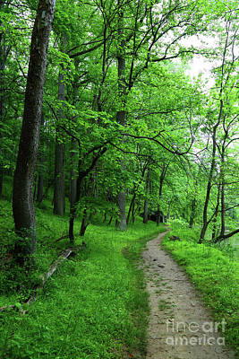 Photograph - Forest Trail In Patapsco Valley State Park by James Brunker