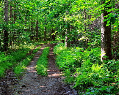 Forest Trail Print by Laurie Breton