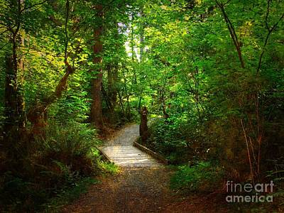 Photograph - Forest Trail by Sharon Talson