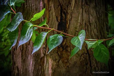 Photograph - Forest Treasure by LeeAnn McLaneGoetz McLaneGoetzStudioLLCcom