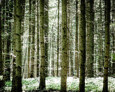 Photograph - Forest Trees by Miguel Winterpacht