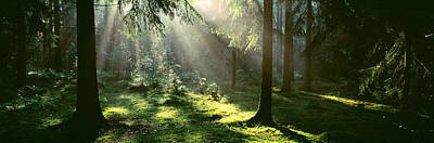 Forest Floor Photograph - Forest Uppland Sweden by Panoramic Images