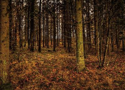 Photograph - Forest View #h0 by Leif Sohlman