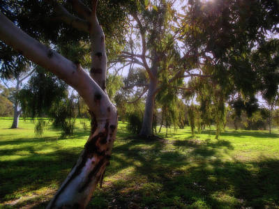 Photograph - Forest View by Mark Blauhoefer