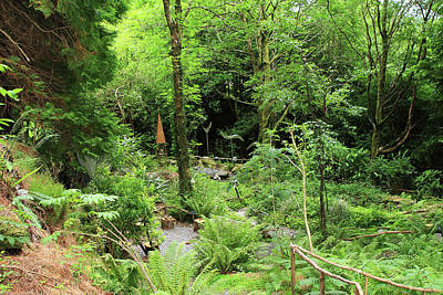 Photograph - Forest Walk by Aidan Moran