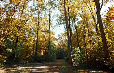 Photograph - Forest Walk by Joseph G Holland