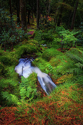 Photograph - Forest  Water Stream. Benmore Botanic Garden by Jenny Rainbow