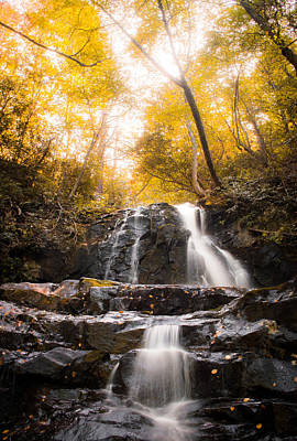 Photograph - Forest Waterfall by Shelby Young