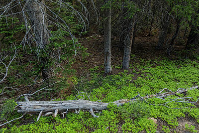 Photograph - Forest Wilderness Greens by James BO Insogna