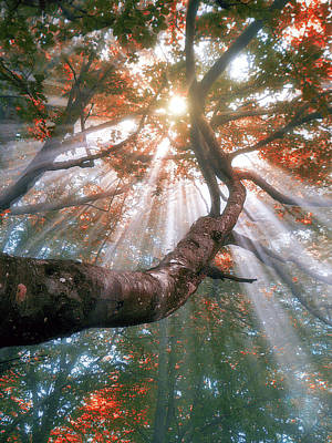 Forest With Fog And Sun Rays Art Print