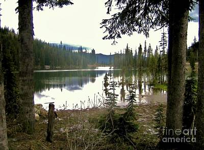 Forest With Lake In British Columbia Original by Reb Frost