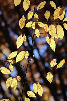 Photograph - Forest Yellow 11 by Mary Bedy