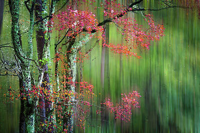 Photograph - Forest Zen Dreamscape by Debra and Dave Vanderlaan
