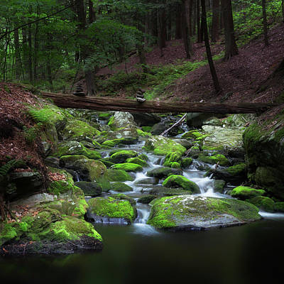 Photograph - Forest Zen Square by Bill Wakeley