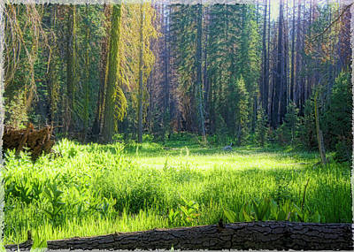 Foresta Art Print by Michael Cleere