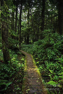 Photograph - Forested Trail by Carrie Cole