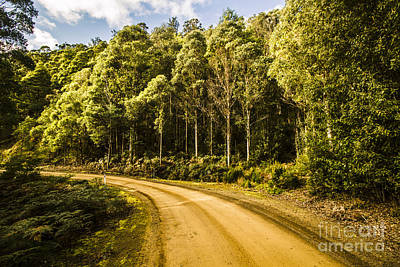 Photograph - Forestry Trails And Scenic Routes by Jorgo Photography - Wall Art Gallery