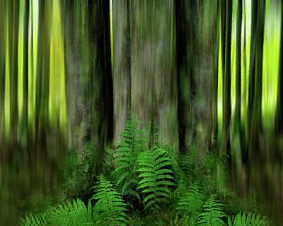 Photograph - Forest's Floor by Dianna Lynn Walker
