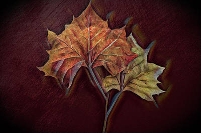 Photograph - Forever Autumn In Vivid Colors And Textures by Debra and Dave Vanderlaan