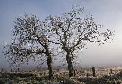 Photograph - Forever Buddies Facing The Fog by Jeremy Lavender Photography