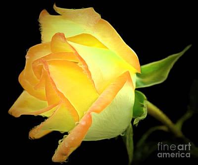 Bouquet Black Background Photograph - Friends Forever by Krissy Katsimbras