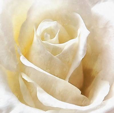 Art Print featuring the photograph Forever More - Ivory Rose by Janine Riley