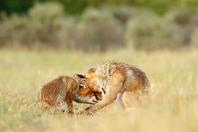 Bonding Photograph - Foreverandeverandever - Red Fox Love by Roeselien Raimond
