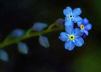 Forget-me-not 4 - Paint Art Print