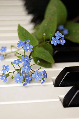 Photograph - Forget Me Not Blossoms On Piano Keys by Di Kerpan