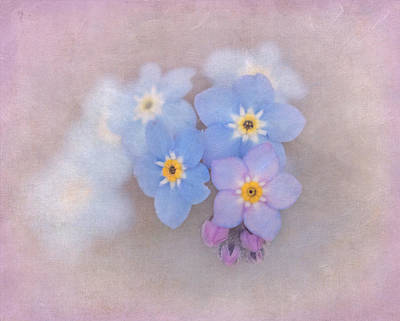 Photograph - Forget Me Not Magic by Angie Vogel