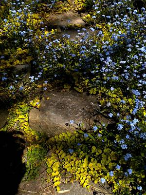 Art Print featuring the painting Forget-me-nots 1 by Renate Nadi Wesley