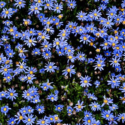 Photograph - Forget-me-nots by Eric Tressler