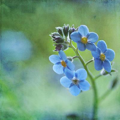 Forget-me-nots Flower Art Print by Jill Ferry