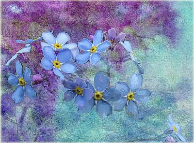 Photograph - Forget-me-nots by Fred Denner