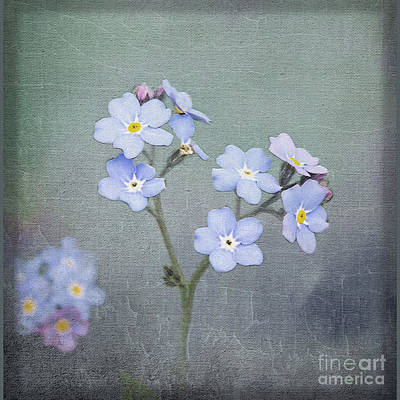 Photograph - Forget Me Not by Liz Alderdice