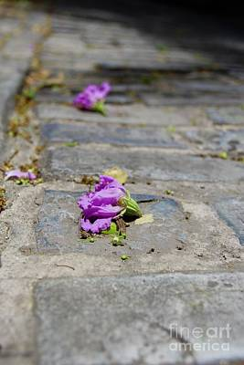 Photograph - Forgotten Beauty  by Suzanne Oesterling