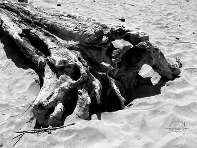 Photograph - Forgotten Driftwood by Absinthe Art By Michelle LeAnn Scott