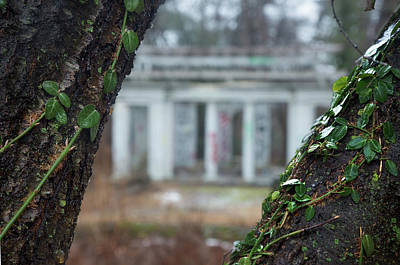 Photograph - Forgotten Garden by Brian Hale