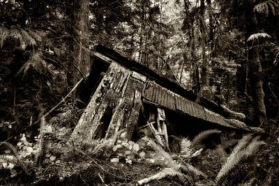 Photograph - Forgotten In The Woods by Inge Riis McDonald