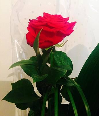 Photograph - Forgotten Rose  by Judith Desrosiers