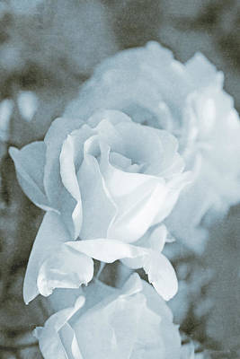 Photograph - Forgotten Roses Blue by Jennie Marie Schell