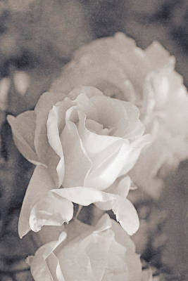 Photograph - Forgotten Ivory Roses by Jennie Marie Schell