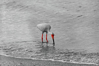 Photograph - Florida Bird In Selective Color by Doug Camara