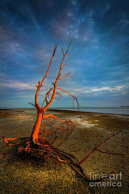Driftwood Photograph - Fork In The Marsh by Marvin Spates