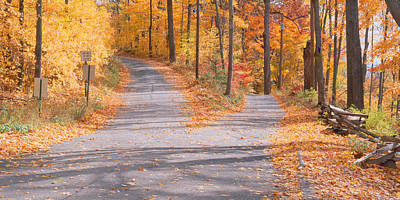 Autumn In The Country Photograph - Forked Road In A Forest, Vermont, Usa by Panoramic Images