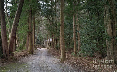 Photograph - Forrest Shrine, Japan by Perry Rodriguez