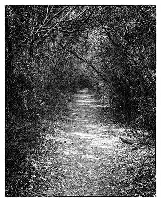 Woodland Trail Photograph - Forest Floor 0102bw by Rudy Umans