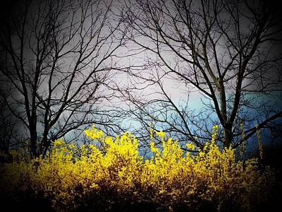 Forsythia By The Mountains Art Print by Joyce Kimble Smith