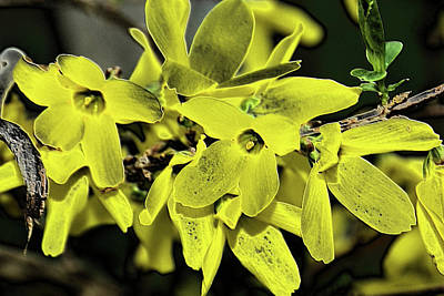 Photograph - Forsythia Sandstone by Robyn Stacey