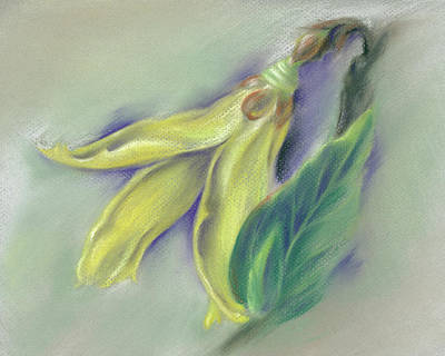 Pastel - Forsythia Springtime by MM Anderson